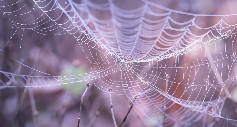 cobweb-1868997_960_720